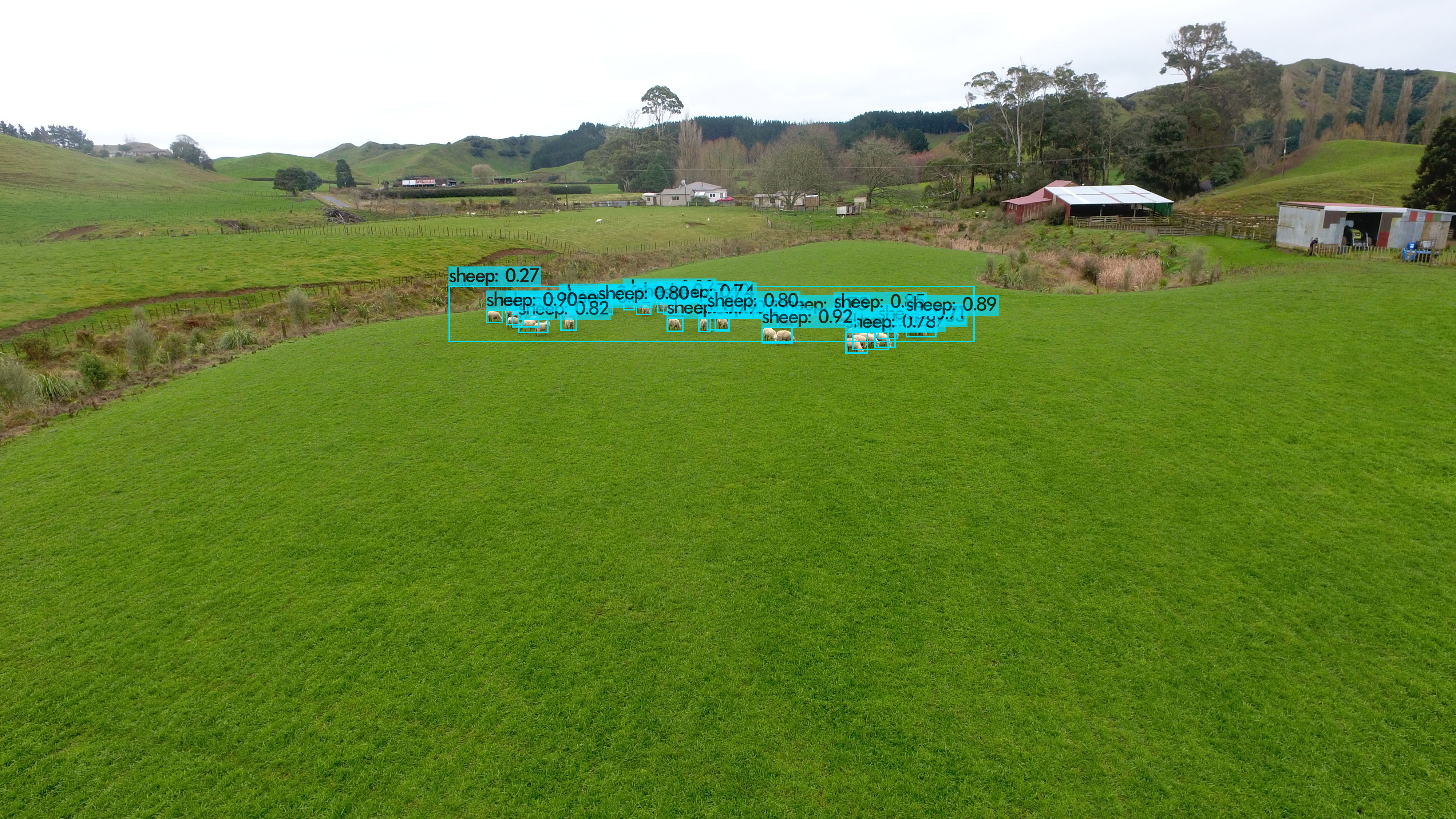 Drone Image for Sheep Count and Pasture