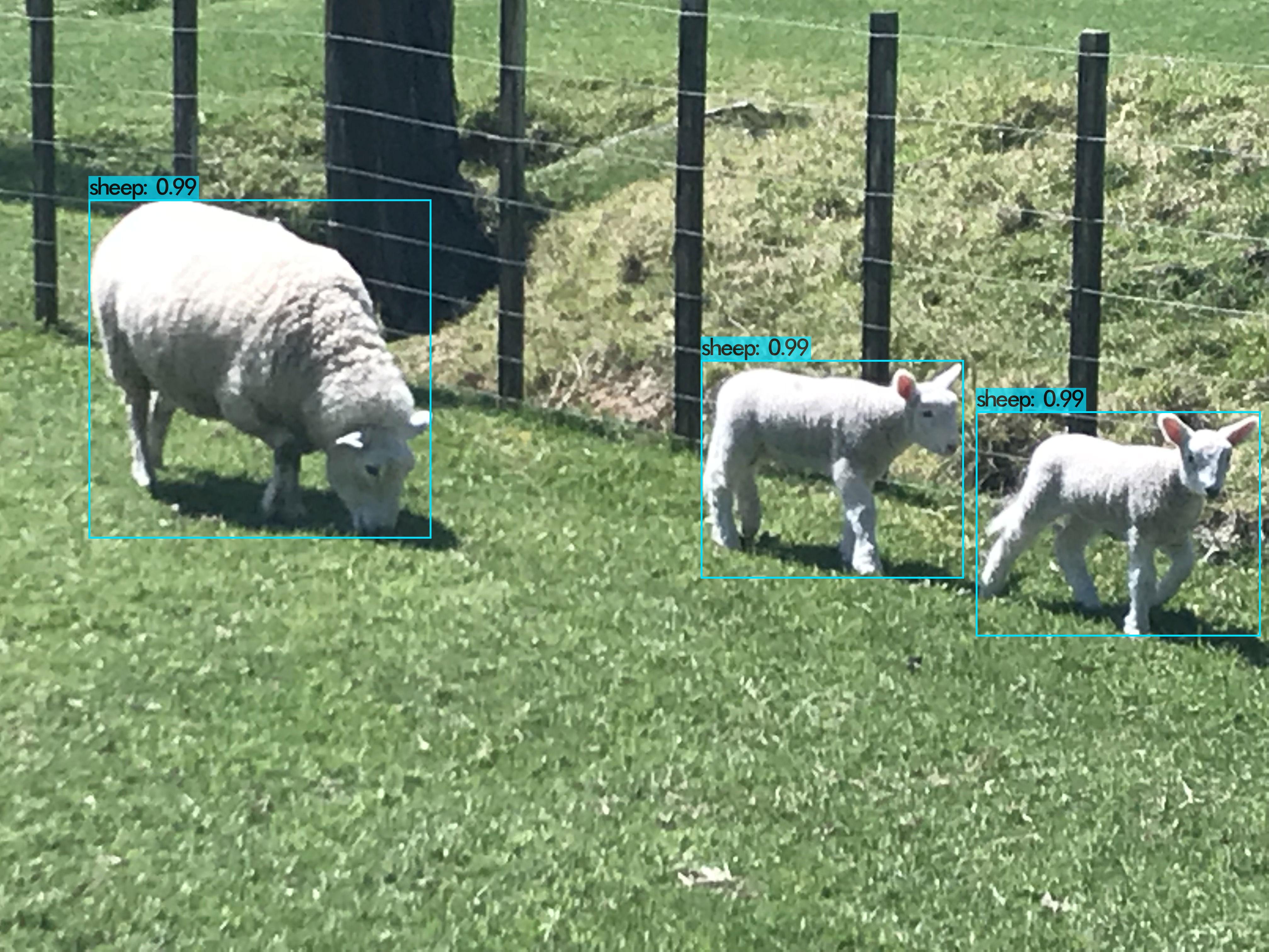 Ewe and Twins